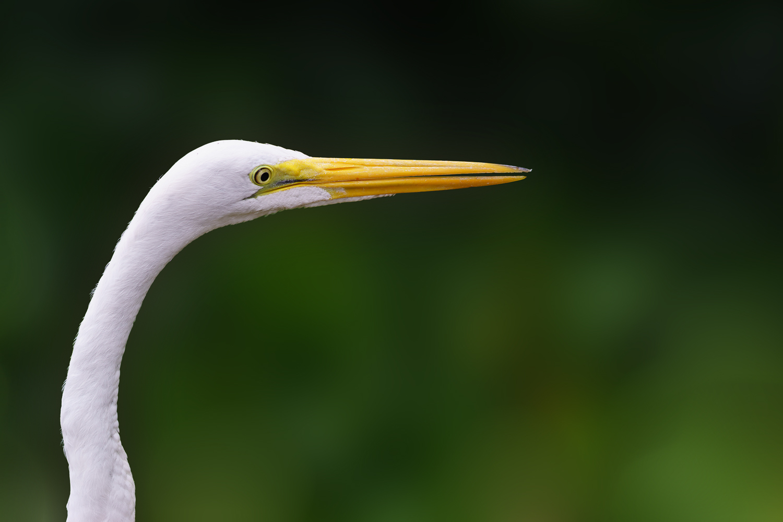 Egret at the Fairchild Botanical Garden