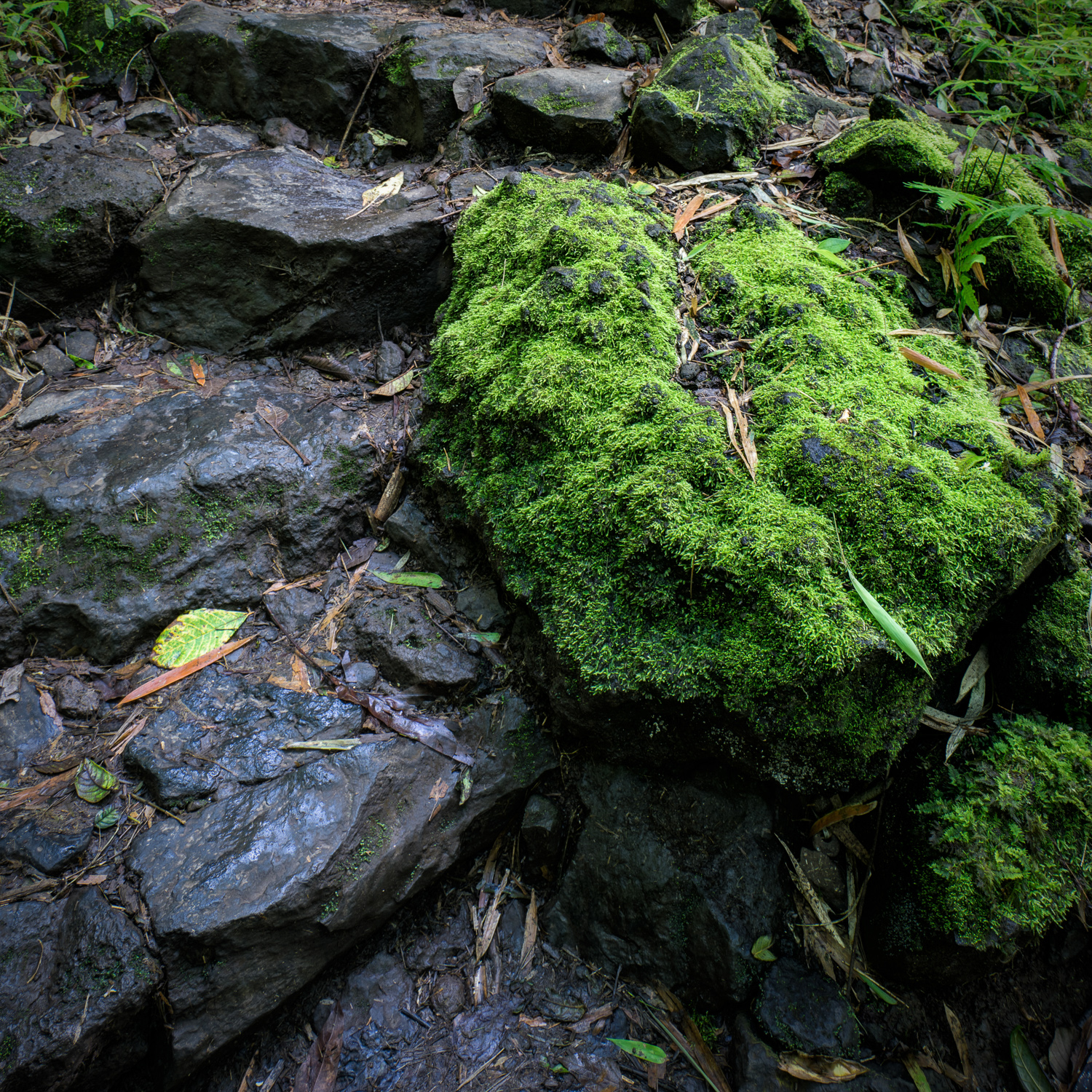 Mossy Rock at the Bamboo Forest