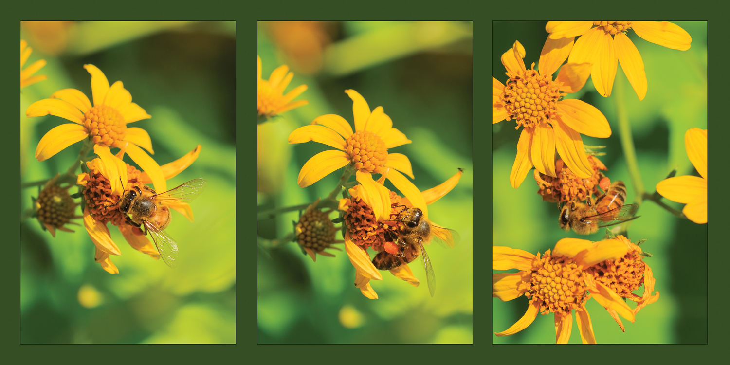 Bee amd Flower Triptych