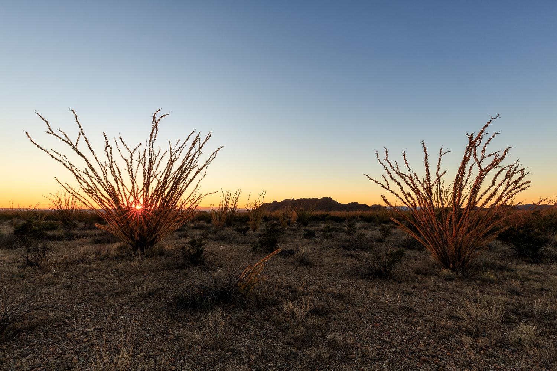 BBNP - Ocotillo Sunset