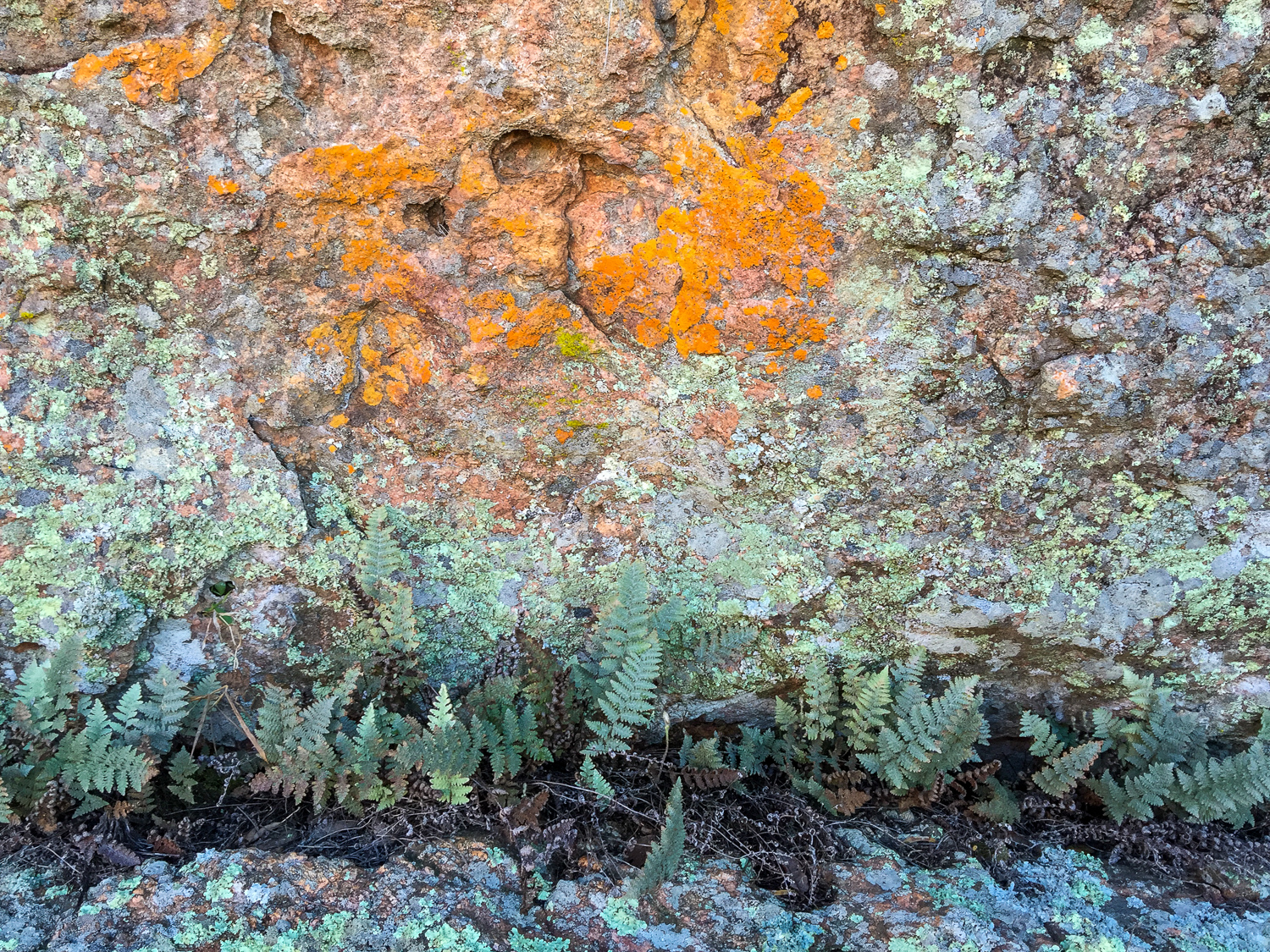Lichen and Ferns