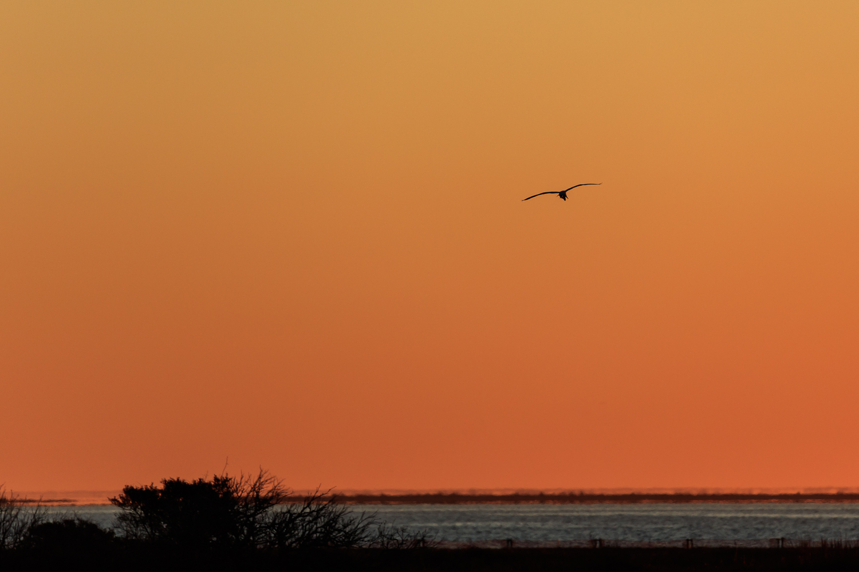 Sunrise Colors with Egret