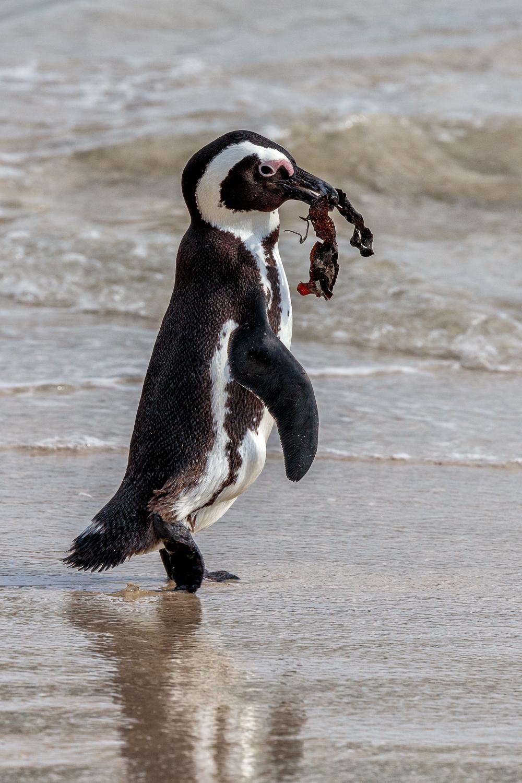 Penguin Nest Builder