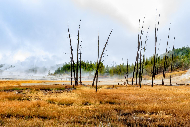 Yellowstone Marsh