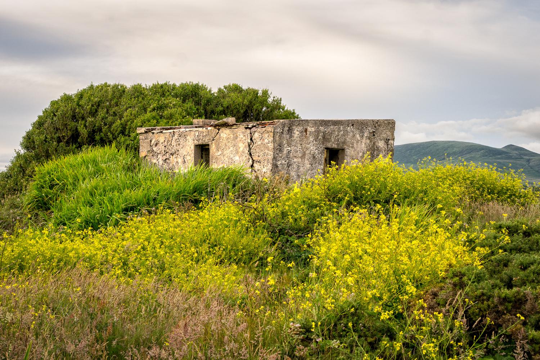 Old Irish Home
